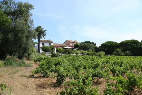 For sale house, villa Saint-Tropez - Old property with vineyards in the Parks of St Tropez