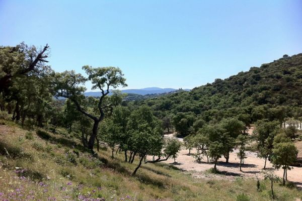 For sale land Grimaud - Land in the country of Grimaud